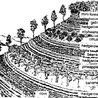 Pt.1 Using Permaculture Hedge Rows on My Land